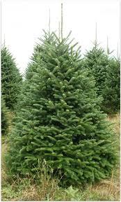 christmas tree prices country cove christmas tree prices