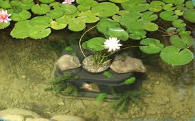 garden pond supplies small container water garden small ponds 17