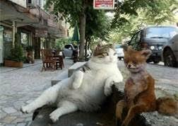 Stoned Fox Meme - russian stoned fox memes pinterest foxes meme and memes