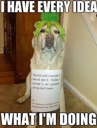 Dog At Vet Meme - meme awesome dog