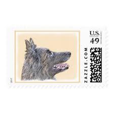 belgian sheepdog merchandise belgian tervuren gifts on zazzle