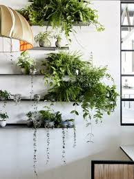 Home Decor With Plants by Decorate With Plants Home Design Ideas