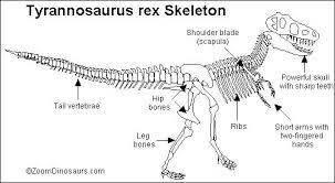 rex skeleton printout zoomdinosaurs