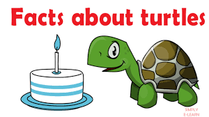 facts about turtles turtle facts for kids educational videos