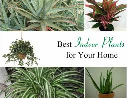 house plants types best 25 indoor plants low light ideas on