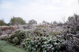 expert advice 9 tips for a colorful winter garden gardenista
