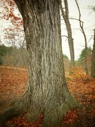benefits of big trees savatree
