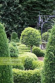 Yew Topiary - gap gardens clipped box and yew topiary parterre garden with