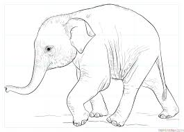 how to draw a baby elephant step by step drawing tutorials