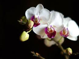 White Orchid Flower 73 Best Orchid Plants Images On Pinterest Orchid Flowers Orchid
