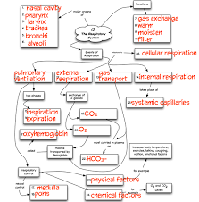 endocrine system concept map chapter 13 concept map truaxbiology com r truax
