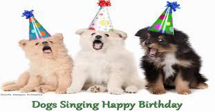 happy birthday singing dogs singing happy birthday jpg