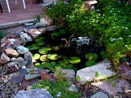 wonderful ornament in small pond like pool using stone border and