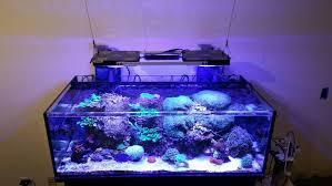 3 watt led aquarium lights ctlite lumini asta 120r1 wifi intelligent led aquarium light with