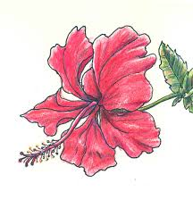 flower drawings with color for kids in black and white
