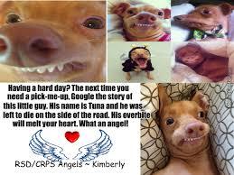Tuna The Dog Meme - tuna the dog by weeredghost meme center