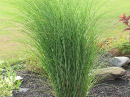 picture grass landscaping decorative grass landscaping