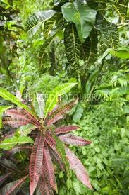 Tropical Rainforest Plant List - image detail for rainforest orchids tropical rainforest plants