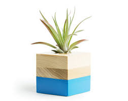 Small Desk Plants by Small Air Plant Holder Free Shipping Black Wood Pot Small