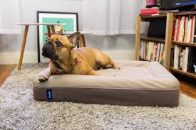 Burrowing Dog Bed Casper Unveils A Brand New Mattress For Your Dog Gq