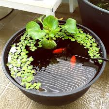 Container Water Garden Ideas Container Water Garden Ideas Small Space Water Gardening Www