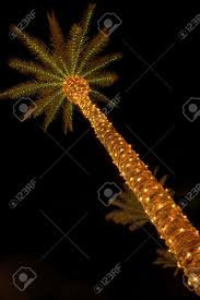 palm tree and christmas lights stock photo picture and royalty