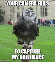 Owl Memes - 12 hilarious owl memes you have to see growld