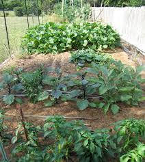 vegetables cce suffolk long island gardening