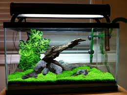 How To Aquascape A Planted Tank 10 Gallon Hardscape Opinions The Planted Tank Forum