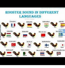 Different Languages Meme - rooster sound in different languages kikiriki cocorico ikukruukuu