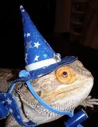 Bearded Dragon Halloween Costume Birthday Bearded Dragon Google Bearded Dragon Pet