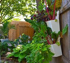 vertical vegetable gardening ideas considerable media for