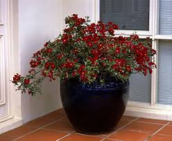 Container Flower Gardening Ideas The Patio Versatile Container Gardening Ideas