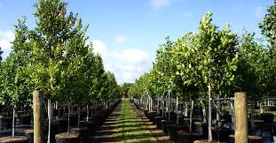best tree farms shrubs u0026 palms miami south florida treeworld