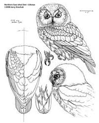 plans for wood carving birds bing images carving woodwork