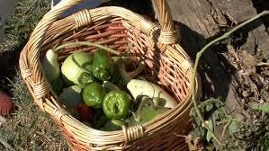 winterize a vegetable garden u2013 last harvest u2013 monkeysee videos