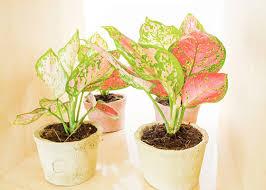 low light houseplants 7 best houseplants for low light garden club