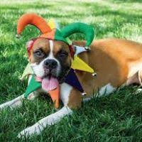 thanksgiving costumes for dogs costume model ideas
