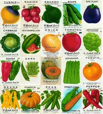 cheap seed packets tomato seeds for sale what to look for when you buy tomato seeds