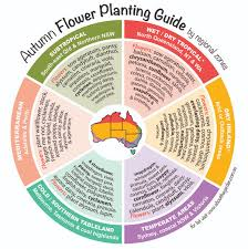 autumn flower planting guide by temperate zones australia