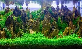 Aquascaping Aquascaping Of The Beautiful Planted Tropical Freshwater Aquarium