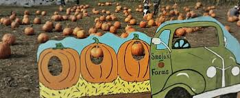 Local Pumpkin Patches New England Fall Events The Best Massachusetts U0027 Guide To Pyo
