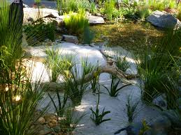 wa native plants water features and native plants gardening with angus