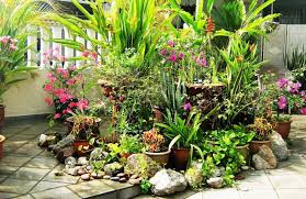 Tropical Plants For Garden - plan a tropical garden with tropical plants at home homes innovator