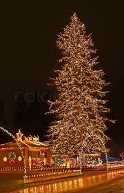 a large evergreen tree is decorated with from top to bottom with