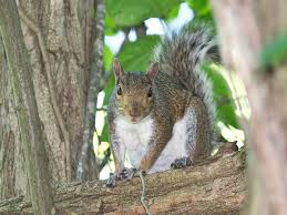 is squirrel hunting a thing yes here u0027s what you should know