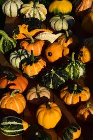 pumpkin halloween background free images flower decoration rural food harvest produce