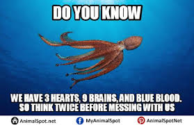 Octopus Meme - octopus memes pictures different types of funny animal memes