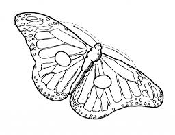 butterfly drawing template 1000 images about butterfly templates