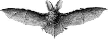 free clipart of a flying bat